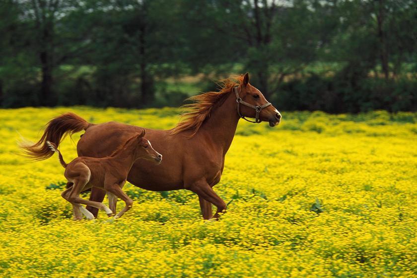 Beautiful Baby Horses Wallpaper Beautiful Baby Horse