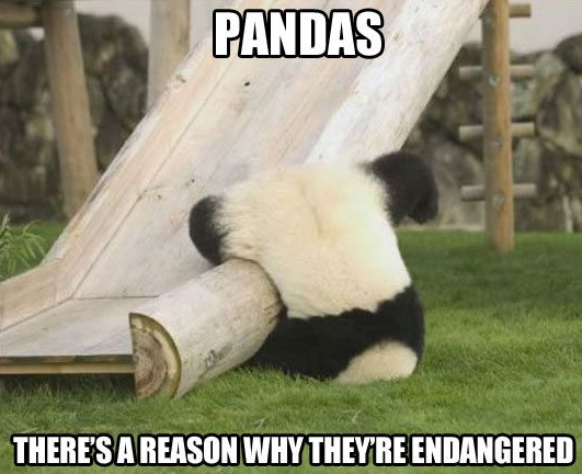 If you see a Pitcher Of Pandas There is a Story Behind it
