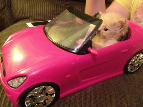 News On Wheels >> Pink Hamster Convertible - Funny - Faxo