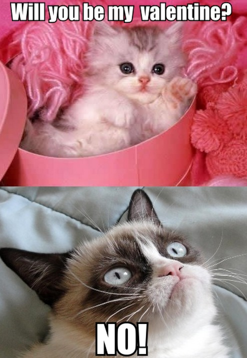 Cute Kitten To Grumpy Cat Will You Be My Valentine?   Tard The Grumpy Cat    Faxo