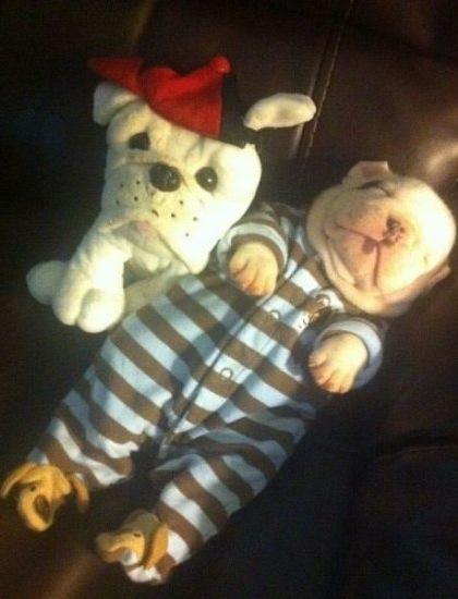 Puppy Cutest Ever Sleeping Bulldog In Pajamas W Dog