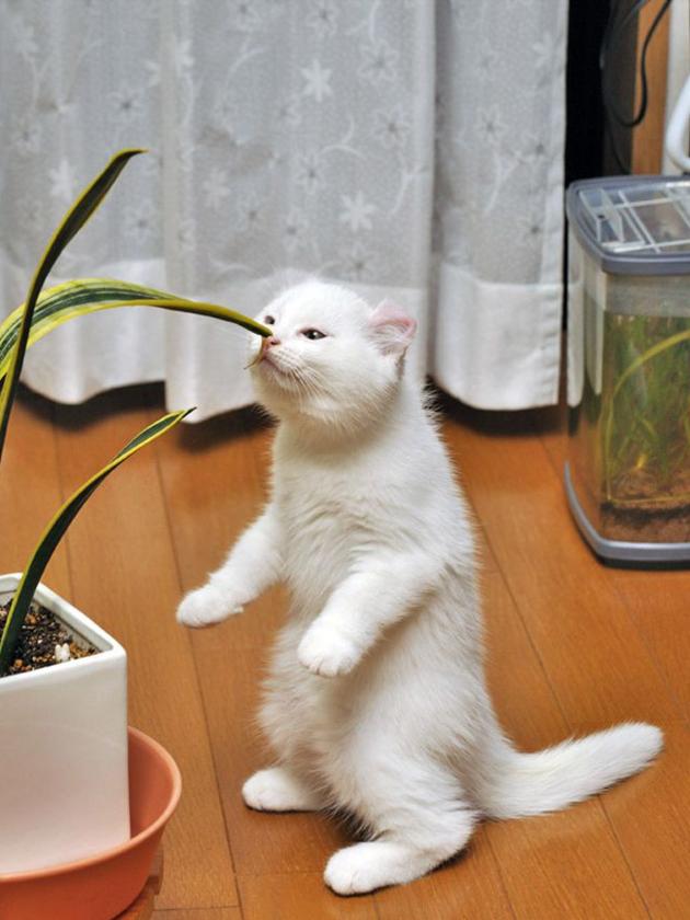 cat litter box 2017